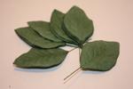 Листья HL576