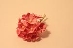 Цветы бумажные FP649