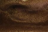 Ткань мохер-щетка густой MJ04182
