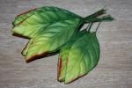 Листья HL5791