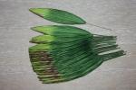 Листья HL575
