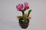 Цветок в горшке FT845