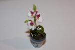 Цветок в горшке FT846